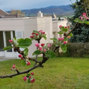jardin hébergement - Clos des Campanules Brioude